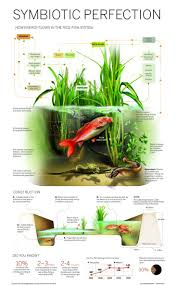 150 best fish pond images on pinterest hydroponic gardening