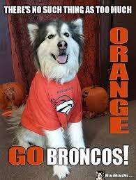 Go Broncos Meme - denver broncos biggest dog fan funny dog in broncos shirt tells