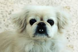 Pictures Of Blind Dogs This Is Keno My Rescue Dog He U0027s Blind In One Eye From Being Hit