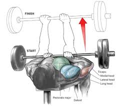 Bench Press Lock Elbows Muscle Specific Training 3 U2013 Triceps Or Is It Triceratops Flat