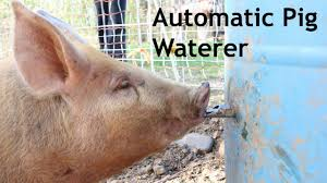 automatic pig waterer how we built this self waterer using a 55