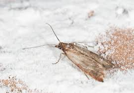 Tiny Moths In My Bathroom How To Get Rid Of Pantry Moths Bob Vila