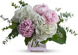 Peony Flowers by Peony Flower Meaning U0026 Symbolism Teleflora