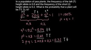 hardy weinberg equilibrium equation problems futurespastart com