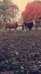 purdue agronomy ambassadors countdown till thanksgiving