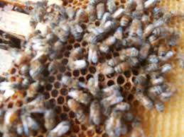 glossary of beekeeping terms buzz beekeeping supplies