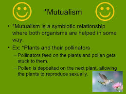 ecology symbiotic relationships