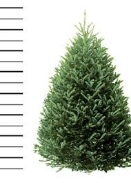 balsam fir trees hilltop tree delivery