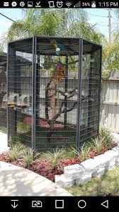380 best parrots images on pinterest bird aviary parrots and