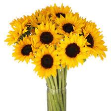 bouquet of sunflowers large sunflowers albuquerque florist