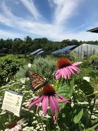 bird friendly native plants audubon birds and bees getting a boost from solar audubon vermont