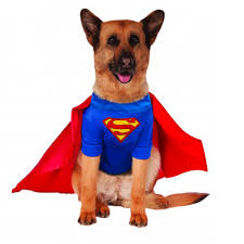 pet costume halloween superman dog halloween costume big dog edition with same day
