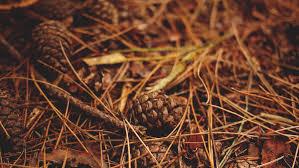 Where To Buy Truffles Online Buy Italian Fresh Truffles Black White Winter Summer