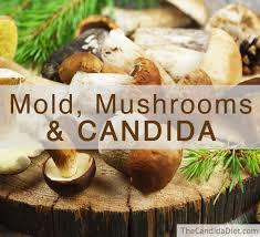 molds mushrooms and candida the candida diet