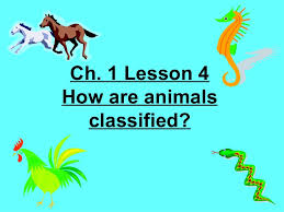 4th grade ch 1 lesson 4 how are animals classified