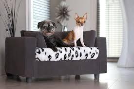 levrette sur canapé découvrez le canapé pour chien giusy pop