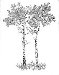 art kure silver birch tree perfect for a tattoo beautiful