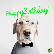 Happy Birthday Dog Meme - 43 best boss birthday greetings image wallpaper meme