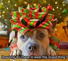 cute dog christmas wallpapers 26 best christmas card ideas images on pinterest holiday ideas