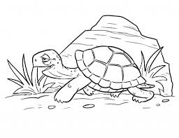 ideas of draw a cartoon turtle want to go to sea turtle coloring