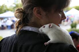 All Living Things Luxury Rat Pet Home by At Adoption Fair Image Is Pet Peeve For Fans Of Rats Pigeons