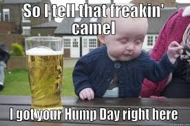 Hump Day Meme - anyone down for a little hump day gif party the bump