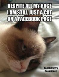Cat Toast Meme - 51 best grumpy cat images on pinterest funny stuff grumpy cat and