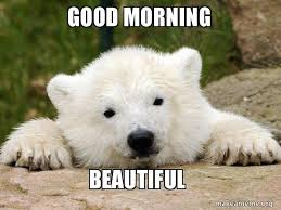 Good Morning Beautiful Meme - good morning beautiful popular opinion bear make a meme