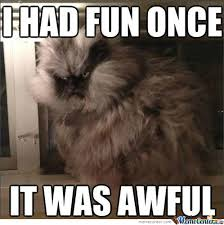 Grumpy Cat Meme I Had Fun Once - grumpy cat is a bitch by recyclebin meme center