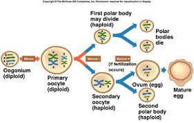 citrus college chapter 9 meiosis