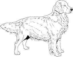 golden retriever puppy coloring pages coloring pages for kids