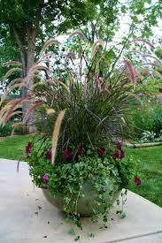 purple fountain grass petunias and trailing ivy make for a lovely
