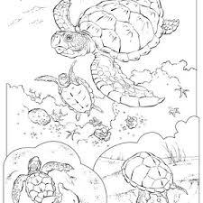 sea turtle in pencil sketch free coloring page sea turtle in