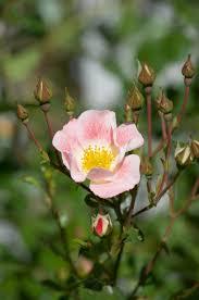 free stock photo of bloom blooming flowers blooms