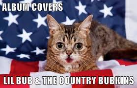 Lil Bub Meme - lolcats lil bub lol at funny cat memes funny cat pictures