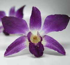 Purple Orchids Purple U0026 White Natural Orchids Preserved Whole Flowers 30 Flowers
