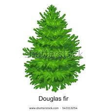 tree like douglas fir new stock illustration 543113254