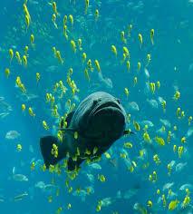 fish wikipedia