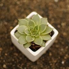 accessories fair picture of square cubic black ceramic planter