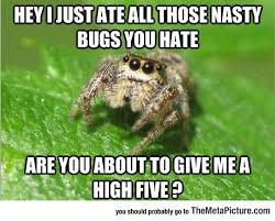 Spider Bro Meme - helpful spider bro bro spider and random