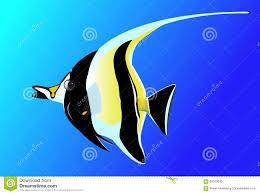 angelfish black and white drawing