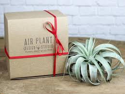 air plant gifts terrariums air plant design studio