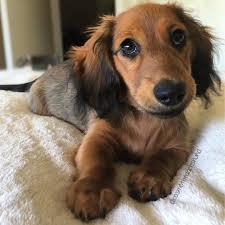 Diy Pronunciation 19 Dog Breed Names You Might Be Pronouncing Wrong Dog Breeds
