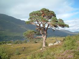 native plants uk wild scotland wildlife and adventure tourism plants and habitats