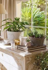 Inside Home Plants by 609 Best Flowers U0026 Indoor Plants Images On Pinterest Flowers