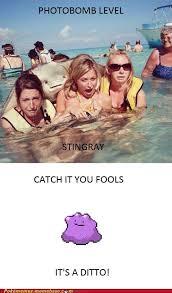 Stingray Meme - pok礬memes photobomb pokemon memes pok礬mon pok礬mon go