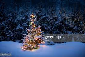 christmas tree with snow christmas tree with fresh and fluffy snow stock photo getty images