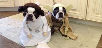 Halloween Costume Ideas Dogs 10 Awesome Halloween Costume Ideas Dogs