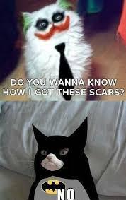 Batman Funny Meme - animal memes grumpy cat batman funny memes
