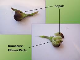 plant reproduction in angiosperms flowering plants ppt download